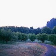 The Apple Farm in California