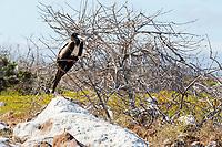 Galapagos Bird 4