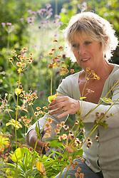 Carol Klein collecting seed from Bupleurum longifolium
