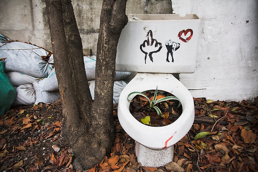 A plant grows from a toilet seat used as a planter outside the offices of the organization Azoteas Verdes (Green Roofs) in the Centro Cultural La Pyramide in Mexico City, Mexico on June 17, 2008. The organization promotes roof garden construction throughout the city, teaching workshops, collecting used containers and preparing compost from organic waste.