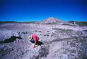 Paleontologist Jack Horner looking at dinosaur egg shells on Egg Mountain near Choteau, Montana.  Jack was much of the inspiration for Michael Crighton's Jurassic Park novel.<br /> Montana.