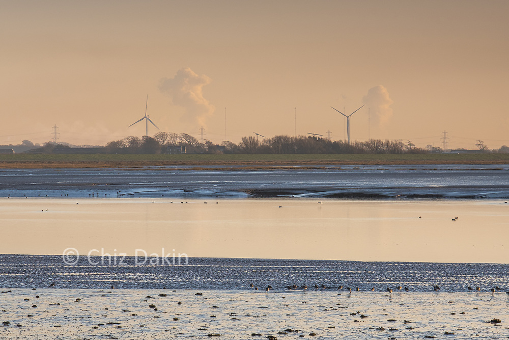 Wading birds on the intertidal mudflats of Cockerham Sands with windfarm behind
