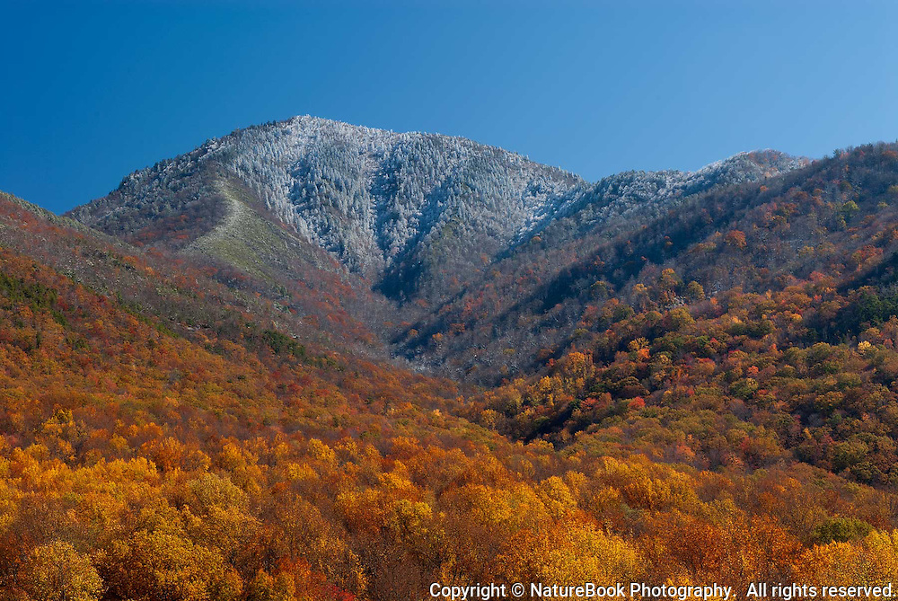 Winter is coming and fall is receding in this view of Mt. LeConte in Great Smoky Mountains National Park.  This image was made in late October, and snow has already fallen on and around the bare trees at the peak of the mountain, which rises to just over 6,500 ft.  Brilliant fall colors remain at lower elevations, but not for long.