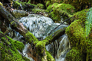 A tributary of Thunder Creek tumbles through green moss along the trail to Fourth of July Pass from Colonial Creek Campground, in Ross Lake National Recreation Area, in the North Cascades mountain range, Washington, USA. The best view is a mile short of the Pass, at Fourth of July Camp, 9 miles round trip with 2000 feet gain.