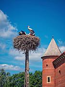 Bocianie gniazdo obok zamku królewskiego w Tykocinie, Polska<br /> Stork nest next to Tykocin Royal Castle, Poland