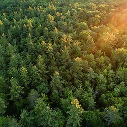An aerial view of the forest in Jackson, New Hampshire. White Mountains.