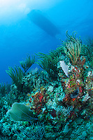 Soft Corals and Dive boat..Shot in British Virgin Islands