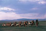 Camel train (Camels bactrians)<br /> Darkhadyn Khotgor Depression<br /> Mongolia