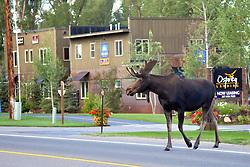 Bull Moose Crossing Road, Jackson Wyoming