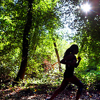 A San Lorenzo Valley High runner is silhouetted by afternoon sunlight as she competes in a Santa Cruz Coast Athletic League home cross country meet against Scotts Valley and Soquel in Henry Cowell Redwoods State Park in Felton, California.<br /> Photo by Shmuel Thaler <br /> shmuel_thaler@yahoo.com www.shmuelthaler.com