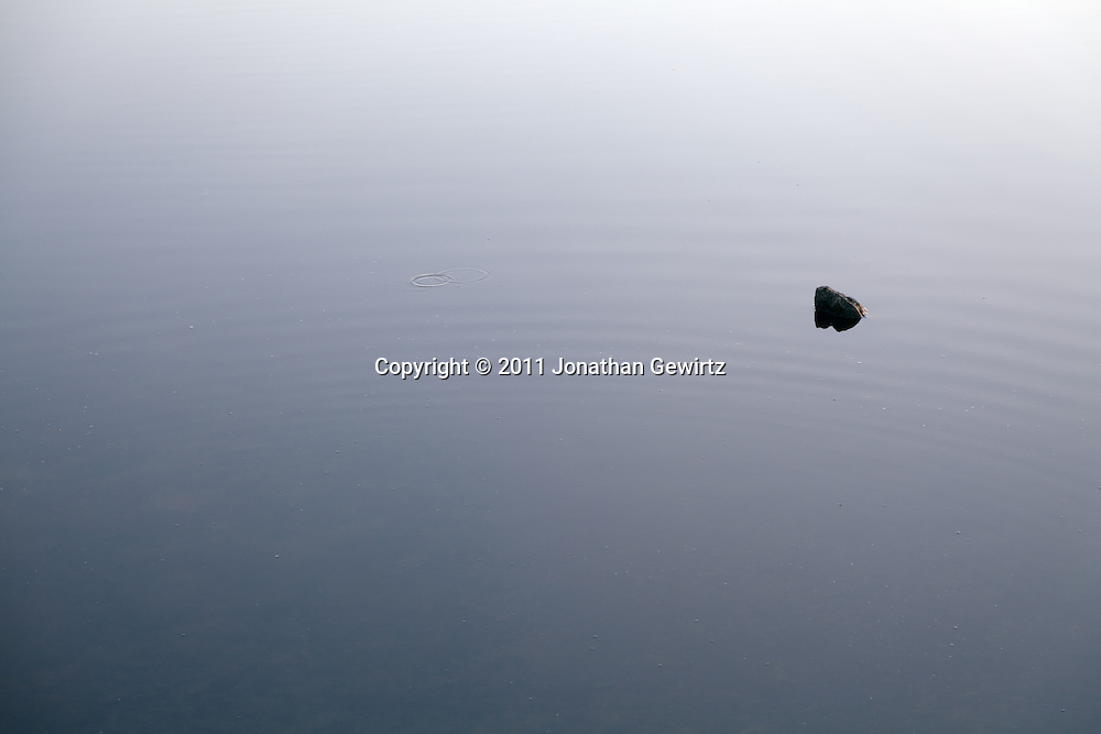 A solitary stone projects from the surface of a tranquil pond. WATERMARKS WILL NOT APPEAR ON PRINTS OR LICENSED IMAGES.