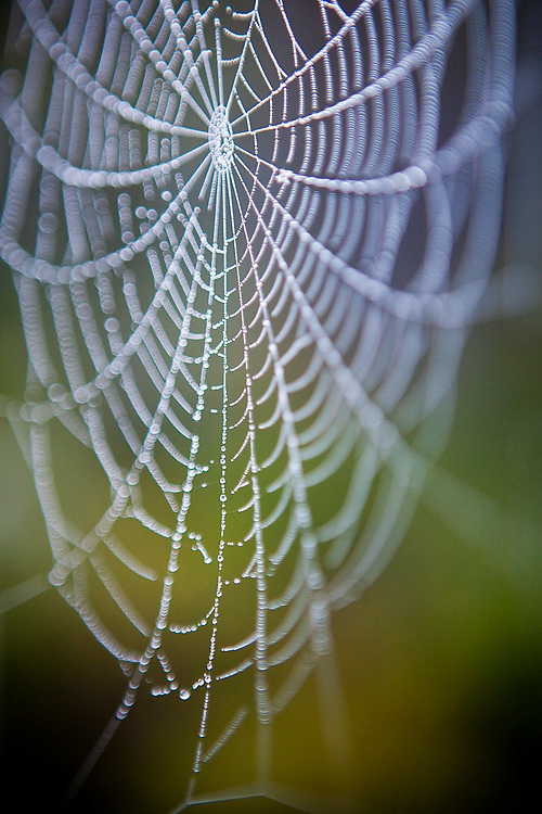 A delicate spiderweb hangs heavy with dew drops at dawn along the McCarthy road into Wrangell-St. Elias National Park, Alaska.