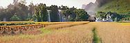 the rice field at banGioc waterfall-the most beautiful one in Vietnam. Hoangnhiem photo.