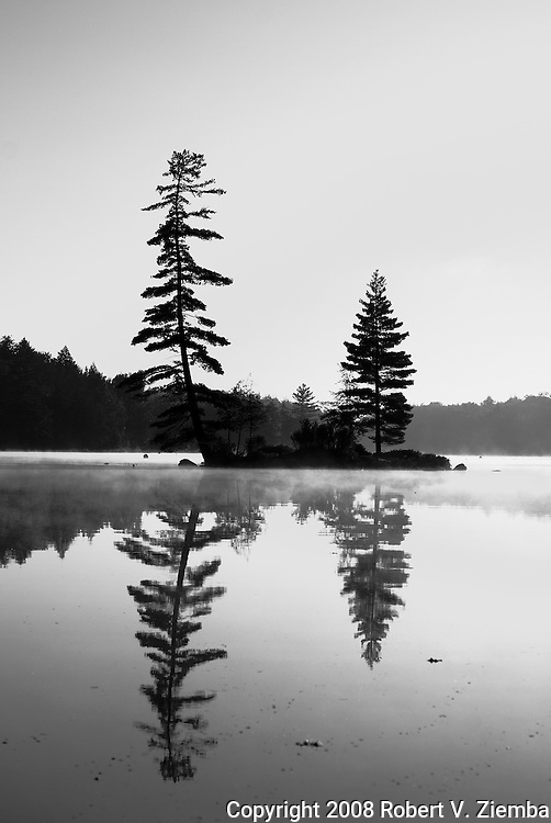 A black and white image of an Adirondack island with two pine trees sihlouetted against the sky and refecting off the water with fog.