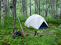 tent campsite in an alder forest along a salmon stream in the interior of Alaska