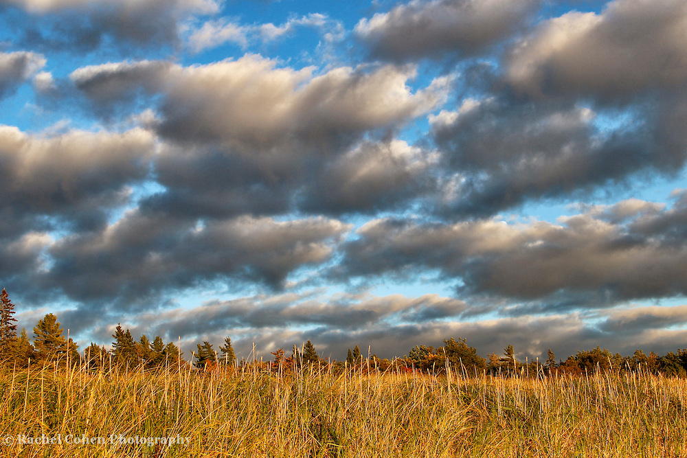 """""""Autumn's Light""""<br /> <br /> With the late day sun, and a storm passing quickly. Beautiful clouds blow past the golden grasses, and trees on Lake Michigan in the Upper Peninsula!<br /> <br /> Autumn Landscapes by Rachel Cohen"""