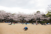 Tokyo - Chiyoda - the season of cherry blossom. People in the north garden of imperial Palace near Nippon Budokan