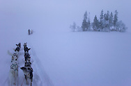Dog sledding, Vindelfjallen National Park, Vasterbotten, Lapland, Sweden. Ecotourism