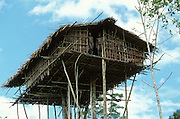 Two Korowai men look down from their treehouse in Papua, Indonesia. September 2000. The Korowai are a so-called treehouse people, building their homes high up in the trees.This particular house, which has been built some fifteen meters above ground, is occupied by two families.