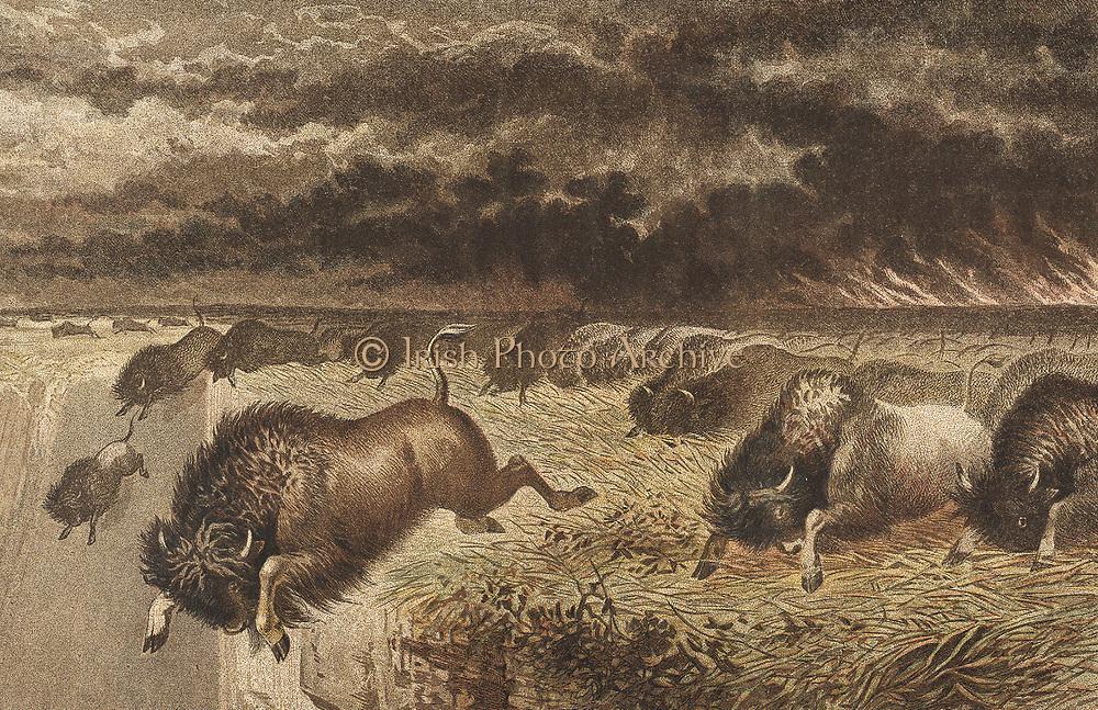 Buffalo (Bison) stampeding over a precipice to escape an advancing prairie fire. Lithograph, 1864