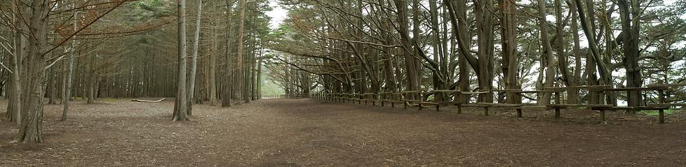 Coastal Trees of the Fitzgerald Marine Reserve. Moss Beach, CA