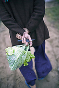 A peasant walks back home with a knife and a lettuce at the Tra Que Vegetable and Herb village, Hoi An, Vietnam