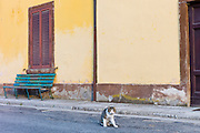 Domestic cat at at Monte Amiata Station in Val D'Orcia,Tuscany, Italy