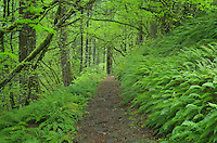 Hiking trail, Columbia River Gorge National Scenic Area, Oregon