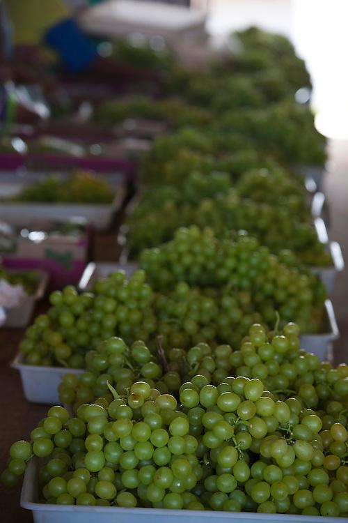 Montes Claros_MG, Brasil.<br /> <br /> Plantacao de uvas em Montes Claros, Minas Gerais.<br /> <br /> Grape crop in Montes Claros, Minas Gerais.<br /> <br /> Foto: LEO DRUMOND / NITRO