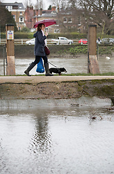 © Licensed to London News Pictures. 02/04/2018. London, UK. A dog walker passes rising floodwater at Deer Park next to Richmond Lock.  Heavy rain has caused some flooding in areas near the River Thames in the south. Photo credit: Peter Macdiarmid/LNP