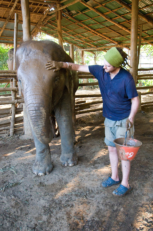 """Volunteer, Kingsley Williams from Australia, given mud bath to an elephant at the Elephant Nature Park near Chiang Mai, Thailand.  Sangduen """"Lek"""" Chailert founded the park as a sanctuary and rescue centre for elephants.  The park currently has 32 elephants sponsored and supported by volunteers from all over the world."""