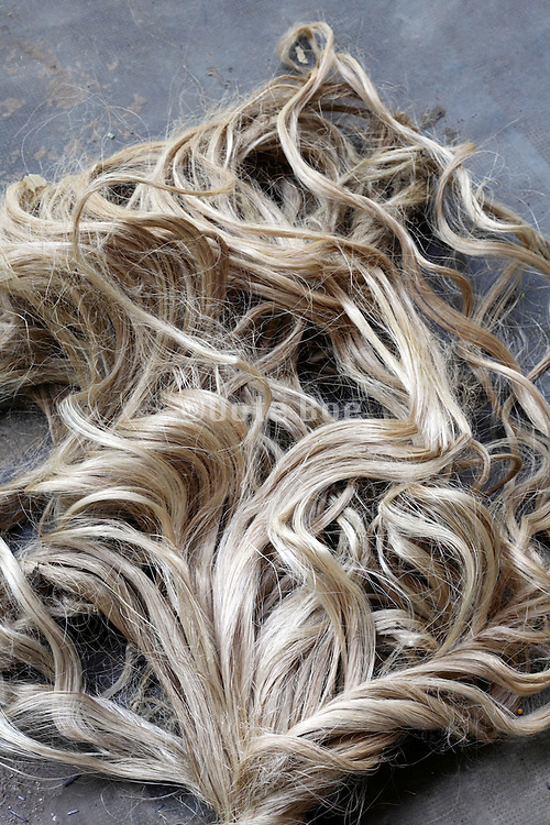 big strand of what looks like curly blond hair