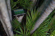 A security guard has his phone hidden in some vegetation streaming the Brazil v Mexico match live while on duty at the top of Morro da Urca. Scenes from Rio de Janeiro on the day that Brazil drew 0-0 with Mexico. Photo by Andrew Tobin/Tobinators Ltd