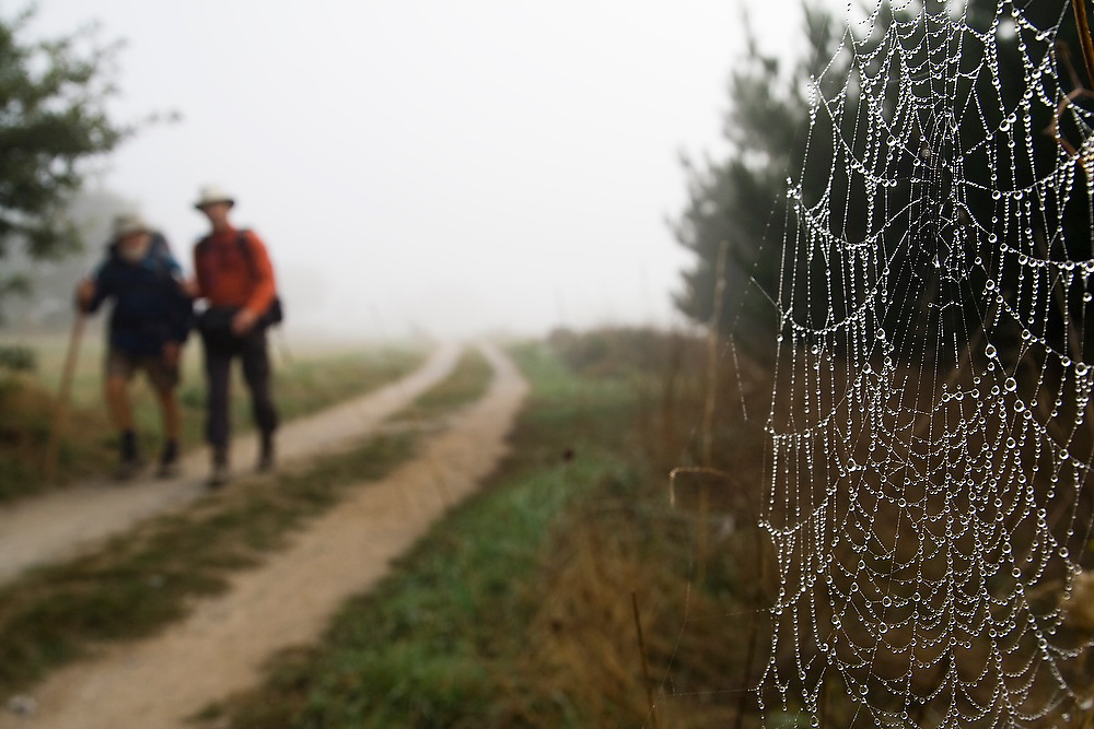 Two pilgrims hike along a dirt road past a spider web with glistening water droplets on the Camino de Santiago between Sarria and Portomarin, Galicia, Spain.