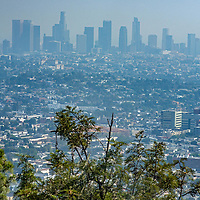 A hawks-eye view of Los Angeles from Griffith Park, where many raptors live.