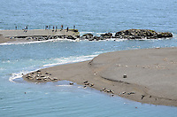 Seals and their newly-born pups on a sandbank at the estuary of the Russian River, at Jenner, Sonoma County, California, USA. Spectators look on from from a jetty opposite. 201304292055<br /> <br /> Copyright Image from Victor Patterson, 54 Dorchester Park, Belfast, UK, BT9 6RJ<br /> <br /> Tel: +44 28 9066 1296<br /> Mob: +44 7802 353836<br /> Voicemail +44 20 8816 7153<br /> Skype: victorpattersonbelfast<br /> Email: victorpatterson@me.com<br /> Email: victorpatterson@ireland.com (back-up)<br /> <br /> IMPORTANT: If you wish to use this image or any other of my images please go to www.victorpatterson.com and click on the Terms & Conditions. Then contact me by email or phone with the reference number(s) of the image(s) concerned.