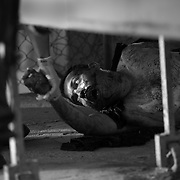 A man shot multiple times in drug related violence is pulled toward a stretcher by a medic in Culiacan, Sinaloa, Mexico..(Credit Image: © Louie Palu/ZUMA Press)