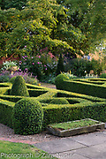 Buxus - box parterre, stone sink with sedums, stone urn with Scaevola 'White Wonder' -Fairy Fanflower, Erysimum 'Bowles Mauve', Rosa 'Royal Jubilee' - Pink English Rose by David Austin, Persicaria affinis 'Superba' RHS AGM - September