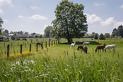 De Paardehoeve - Tervuren 2013<br /> © Dirk Caremans