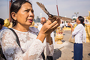 03 FEBRUARY 2013 - PHNOM PENH, CAMBODIA: Cambodians release birds along the Mekong River waterfront to honor former King Norodom Sihanouk, who ruled Cambodia from independence in 1953 until he was overthrown by a military coup in 1970. Releasing birds and small animals is a way of making merit for a better life in Cambodian culture. The only music being played publicly is classical Khmer music. Sihanouk died in Beijing, China, in October 2012 and will be cremated during a state funeral royal ceremony on Monday, Feb. 4.     PHOTO BY JACK KURTZ