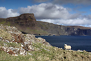 Images taken near Neist Point, the westernmost point on the Isle of Skye, Scotland