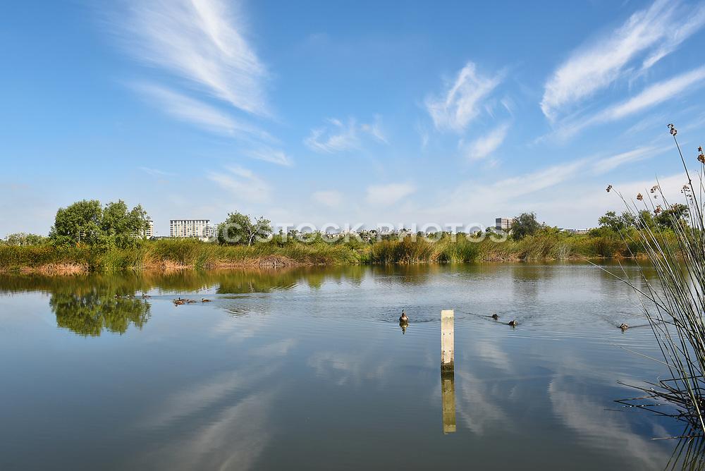 Ducks on the Pond at San Joaquin Marsh Reserve Irvine
