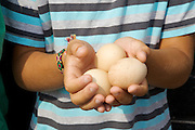Joseph, 12, holding eggs from the chickens at Hares Farm. CREDIT: Vanessa Berberian for The Wall Street Journal<br /> UKFARM-Hares Farm
