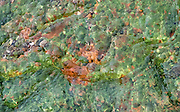 Bacteria in a geothermal stream  in Yellowstone National Park produce a myriad of bright contrasting colors