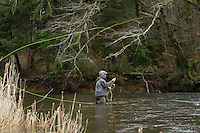 Fly fishing for steelhead on the Necanicum River, OR.