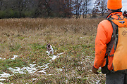 Jared Wicklund hunts pheasants with his English pointer in Minnesota