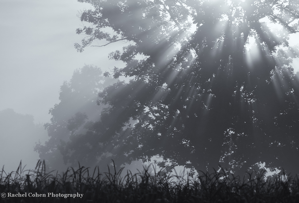 """""""Silent Blessings""""<br /> <br /> A stunning black and white foggy landscape with rays of sunlight streaming through the tree!"""