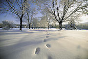 Footprints walking into snow covered landscape.
