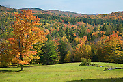 Colorful maple tree in grass field with mountains in background.