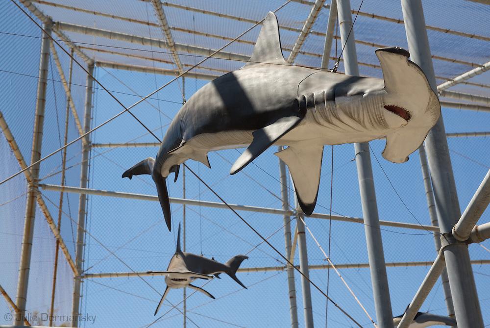 A taxidermy hammerhead shark on display at the Cabrillo Marine Aqurium in San Pedro, CA.